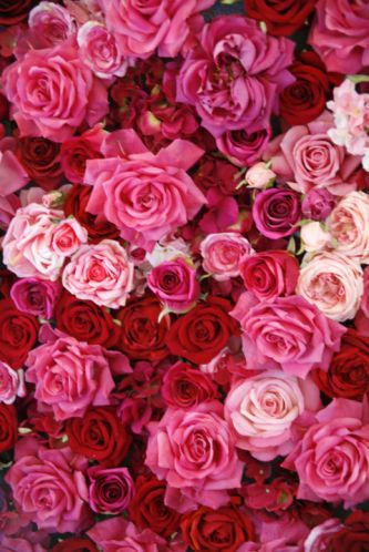 gallery-1483715555-pink-and-red-roses