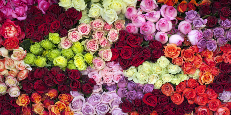 The Meaning of Every Rose Color – Capital City Real Estate Magazine