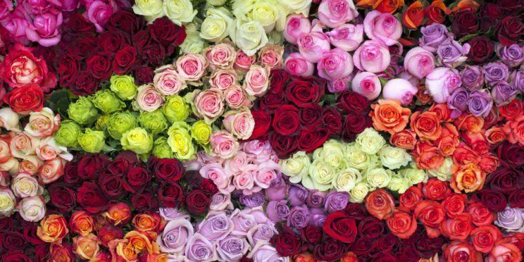 landscape-rose-color-meanings-1